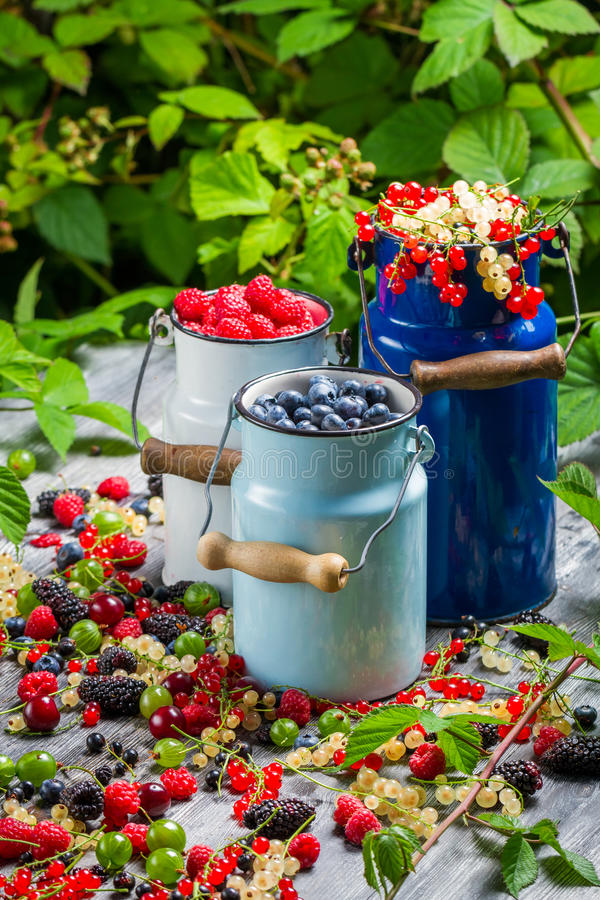 Freshly harvested wild berry fruits stock photography