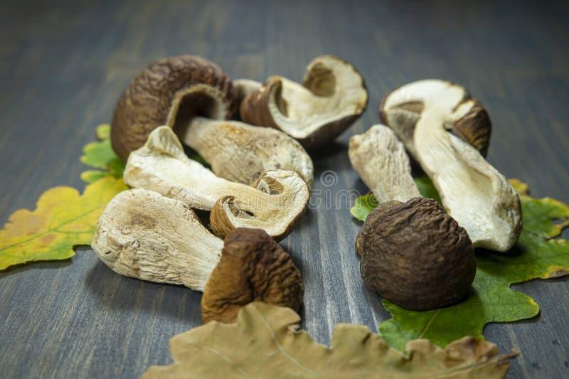 Freshly harvested woodland mushrooms stock photography