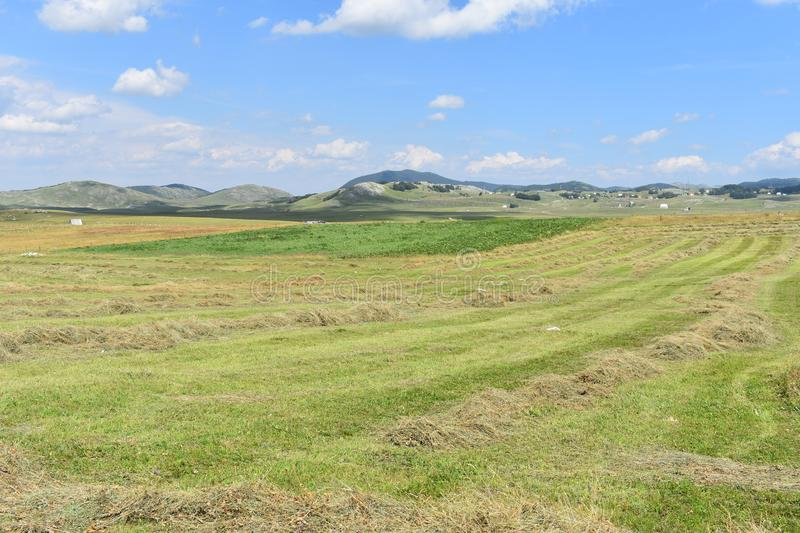 The freshly mowed meadow and the hay stock image