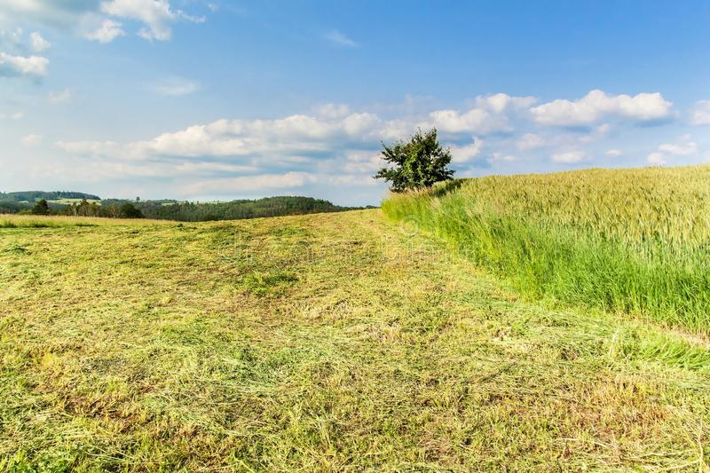 Freshly mowing meadows in the Czech Republic - Europe. Agricultural landscape. Summer day on the farm royalty free stock photo