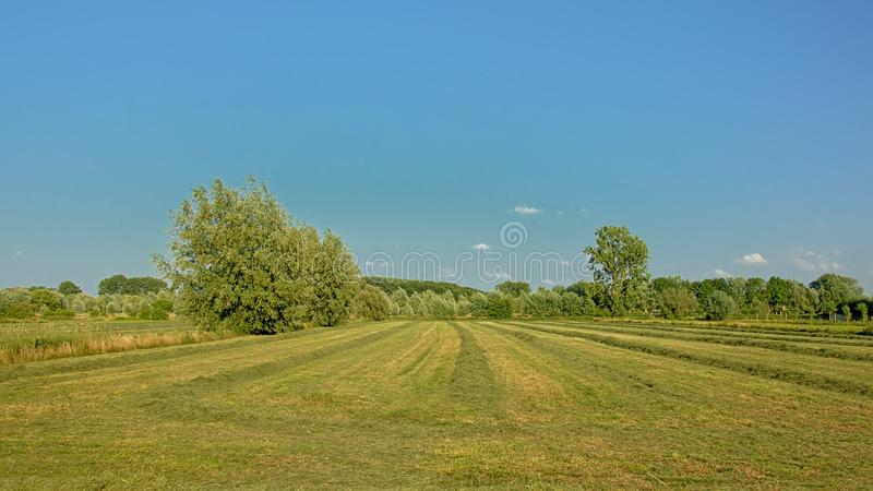 Freshly mown meadow with trees under a clear blue sky in Kalkense Meersen nature reerve, Flanders, Belgium. Fresh mown meadow with trees under a clear blue sky stock photos