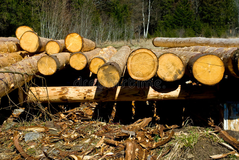 Download Freshly Peeled Logs stock photo. Image of drying, outdoor - 4889202