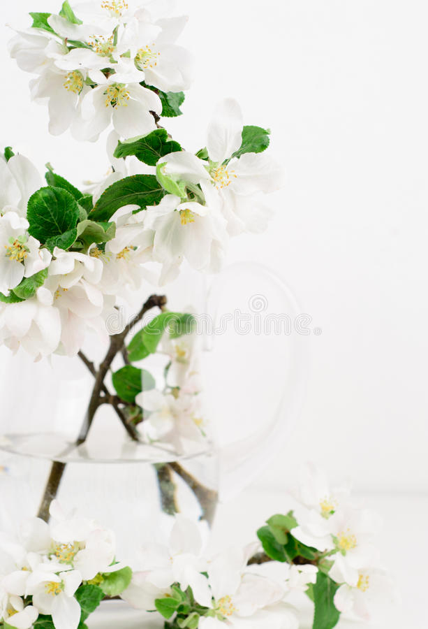 Freshly picked apple flowers royalty free stock photos