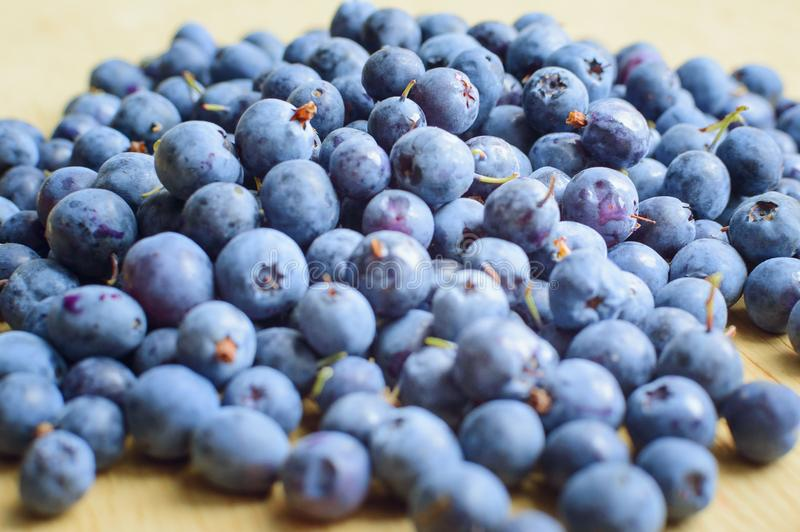 Freshly picked blueberries royalty free stock photo