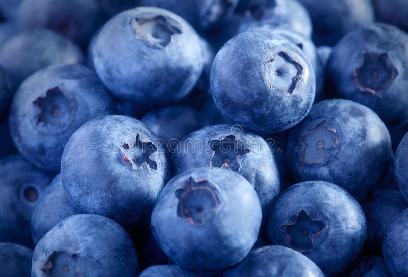 Freshly picked blueberries. Close up stock photo