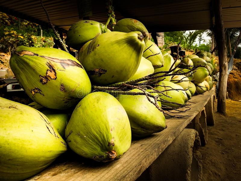Freshly picked coconuts on display in rural Oaxaca. A display of freshly-picked whole coconuts royalty free stock images