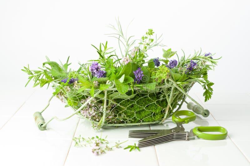Freshly Picked Herbs royalty free stock image