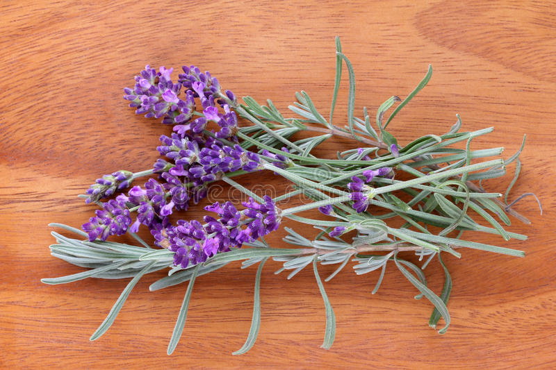 Freshly picked Lavender Flowers. From the garden royalty free stock photos