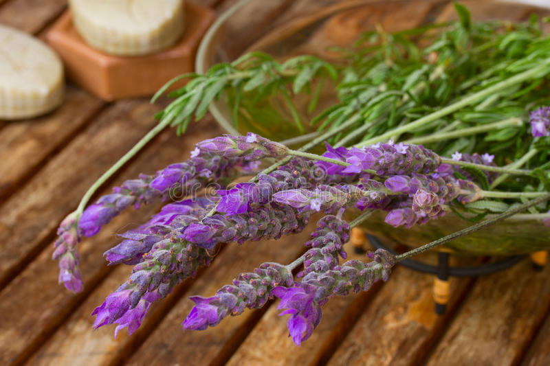 Freshly picked lavender flowers. On wooden table stock images