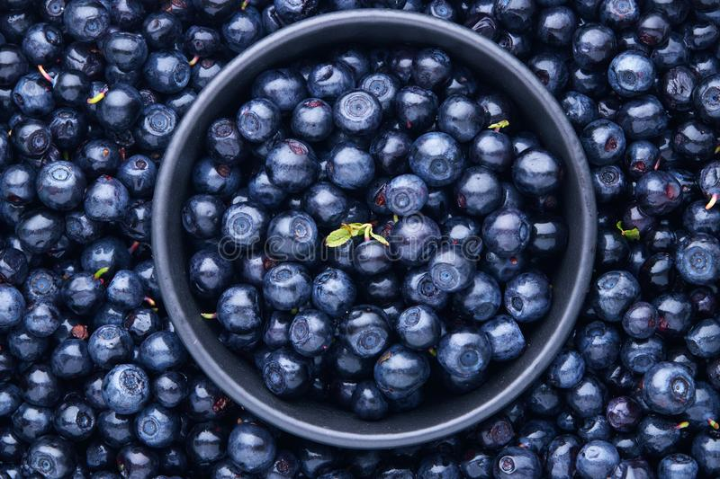 Freshly picked organic blueberries. Full Frame Shot Of Fresh Blueberry Fruits royalty free stock images