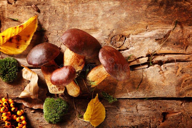 Freshly picked porcini or boletus mushrooms royalty free stock image