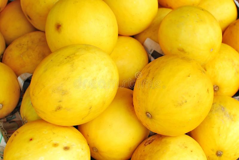 Freshly picked rare yellow melons
