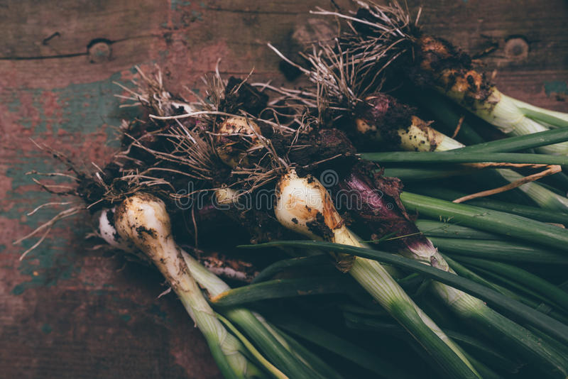 Freshly picked spring onion on table royalty free stock images