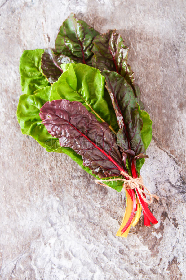 Freshly picked swiss rainbow Mangold or Swiss chard 'Rainbow'. Leaves stock images