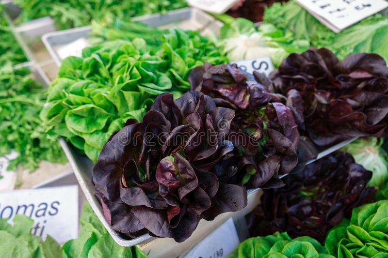 Freshly picked whole lettuce varieties on farmer`s market royalty free stock images