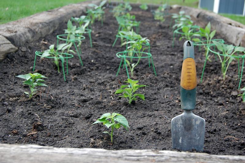 Freshly Planted Plants in Large Garden Bed stock image