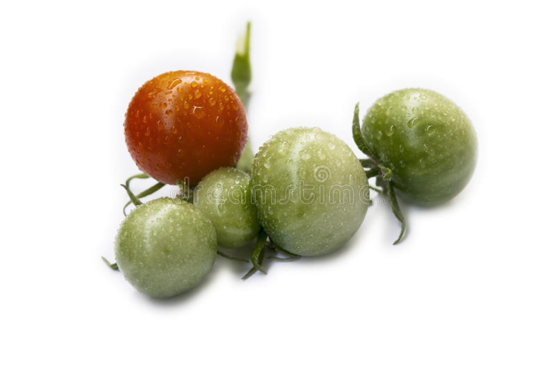 Freshly reaped tomatos with dew. Freshly picked tomatos with beautiful water drops stock image