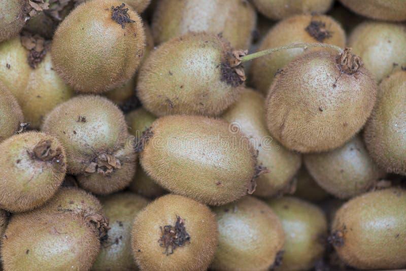 Freshly samlat Kiwi Kiwi är bär från den utsökta vindruvan Actinidia arkivfoto