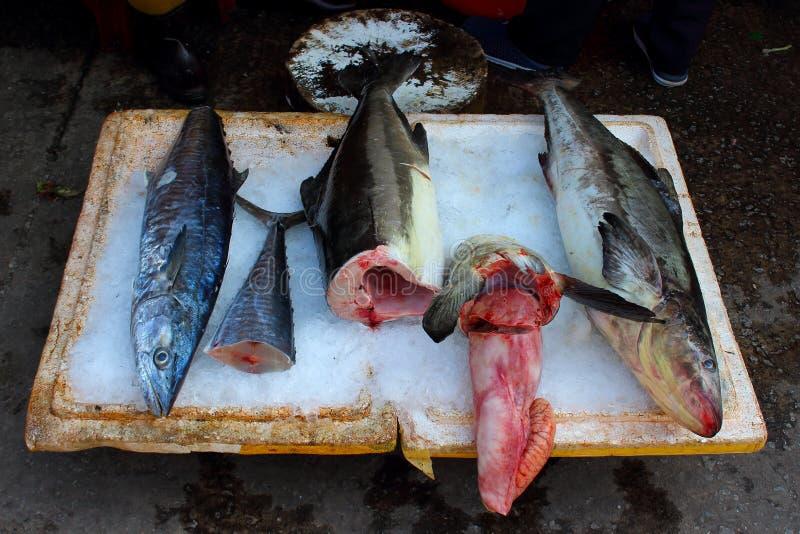 Fresh fish on market stock photography
