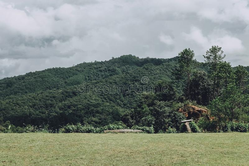 Freshness green forest at View point of Forest Fire Control 2, Chiang Mai Thailand.  royalty free stock image