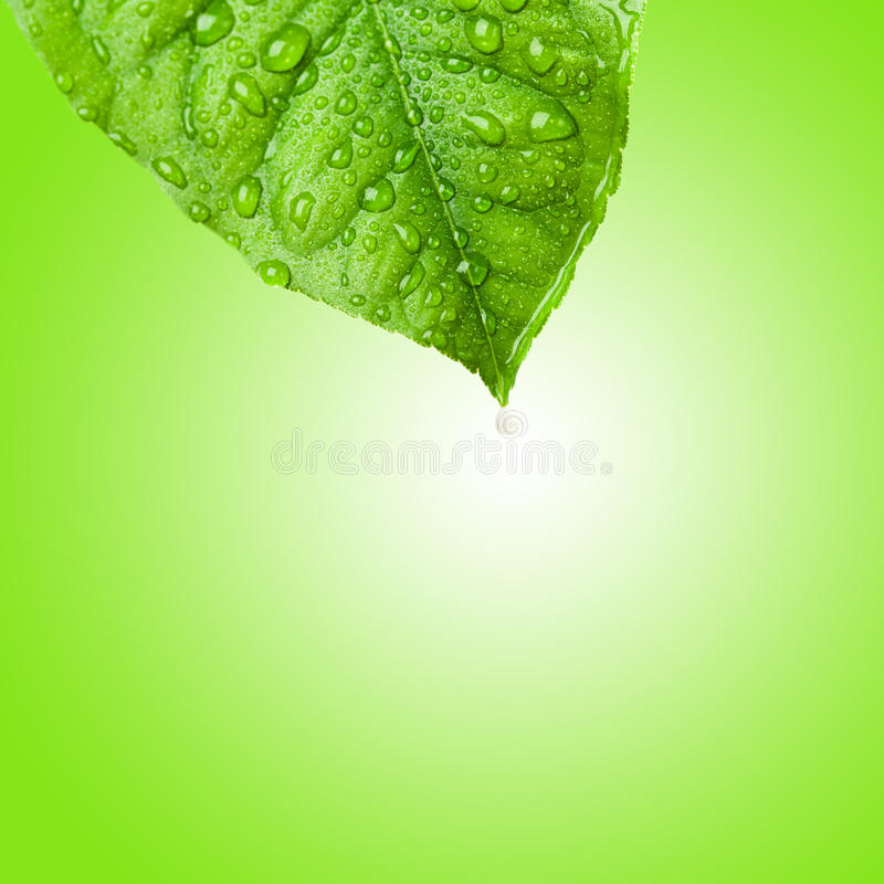 Freshness of nature royalty free stock photo