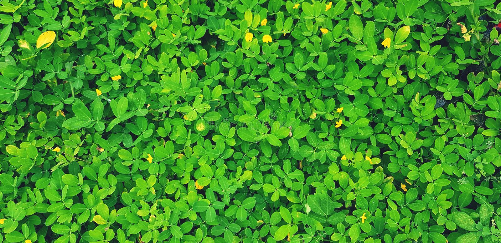 Freshness small green leaves and yellow flower for background at garden park in vintage tone. Natural wallpaper, Beauty of Nature and Fresh floral or leaf royalty free stock images