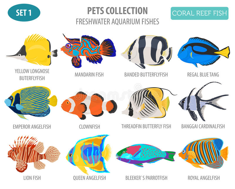 Freshwater aquarium fish breeds icon set flat style isolated on. White. Coral reef. Create own infographic about pet. Vector illustration royalty free illustration