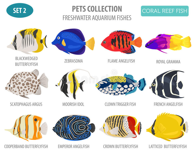 Freshwater aquarium fish breeds icon set flat style isolated on. White. Coral reef. Create own infographic about pet. Vector illustration stock illustration