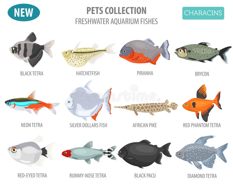 Freshwater aquarium fishes breeds icon set flat style isolated o. N white. Characins. Create own infographic about pets. Vector illustration vector illustration