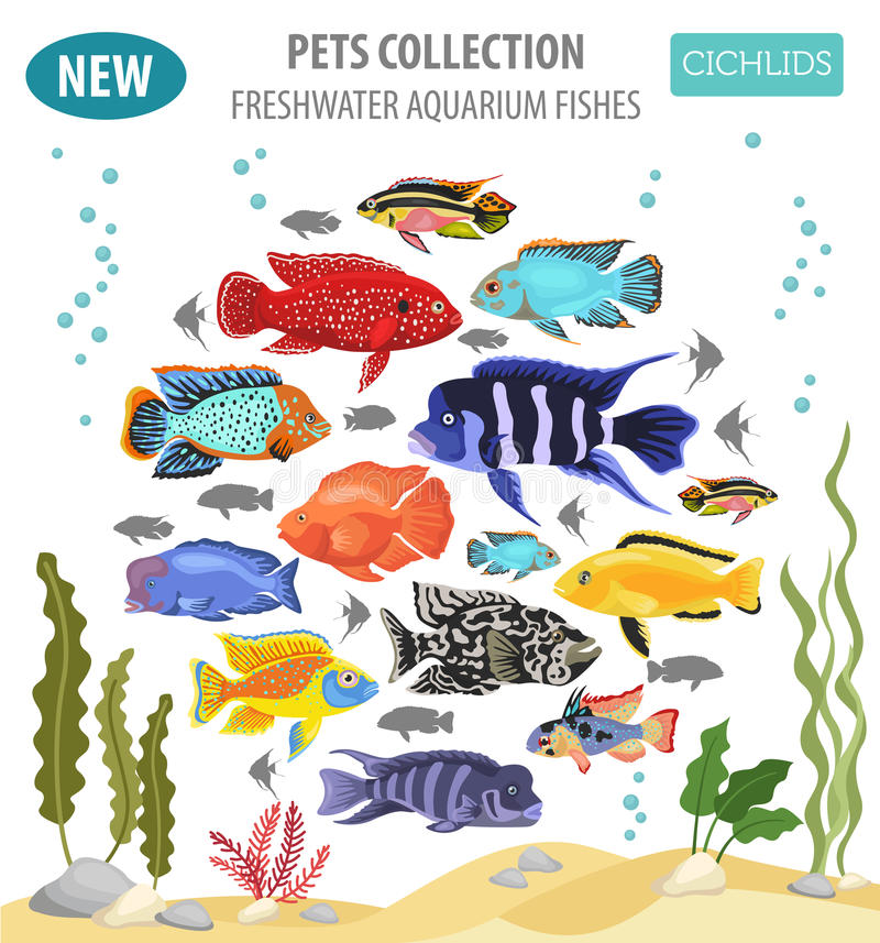 Freshwater aquarium fishes breeds icon set flat style isolated o. N white. Cichlids. Create own infographic about pets. Vector illustration vector illustration
