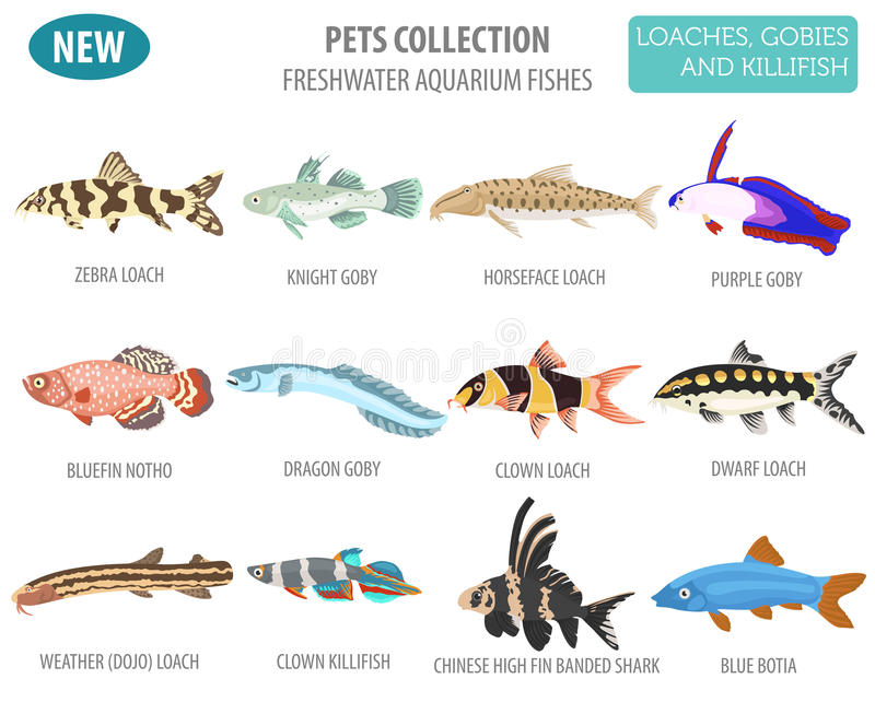 Freshwater aquarium fishes breeds icon set flat style isolated o. N white. Loaches, gobies, killifishes. Create own infographic about pets. Vector illustration stock illustration