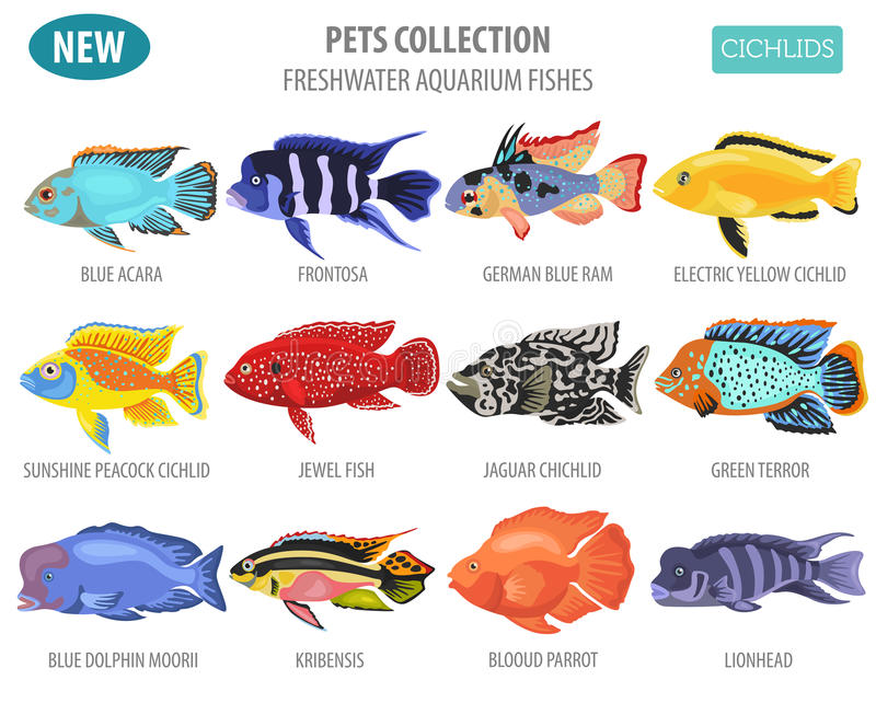 Freshwater aquarium fishes breeds icon set flat style o. N white. Cichlids. Create own infographic about pets. Vector illustration vector illustration