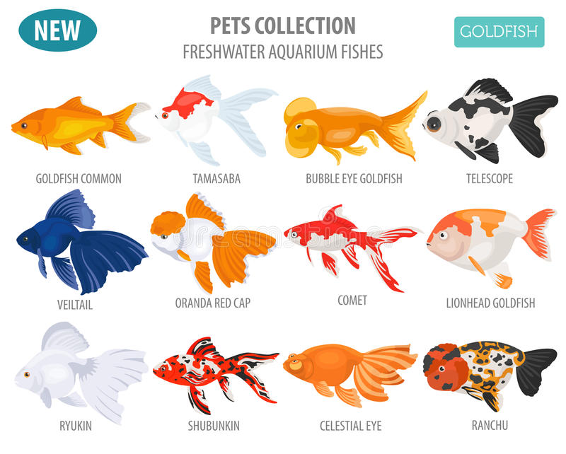 Freshwater aquarium fishes breeds icon set flat style o. N white. Goldfish. Create own infographic about pets. Vector illustration vector illustration