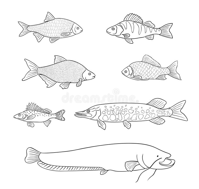 Free Freshwater Fish In Outlines - Vector Illustration Stock Photos - 108062263