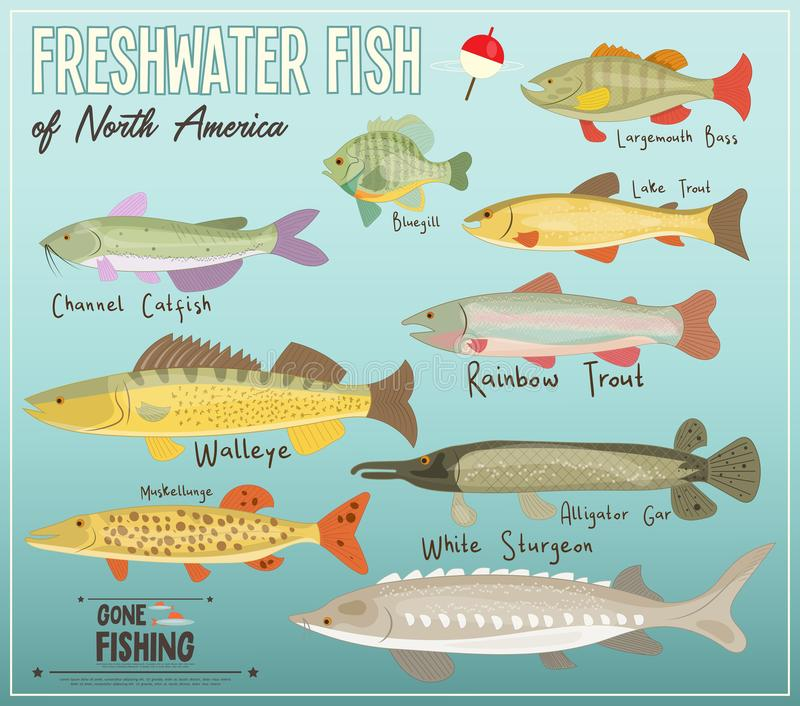 Freshwater Fish of North America. Infographic Poster for Fishing Club. Vector Illustration royalty free illustration