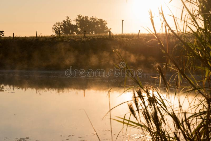 Freshwater pond at dawn 02 royalty free stock photography