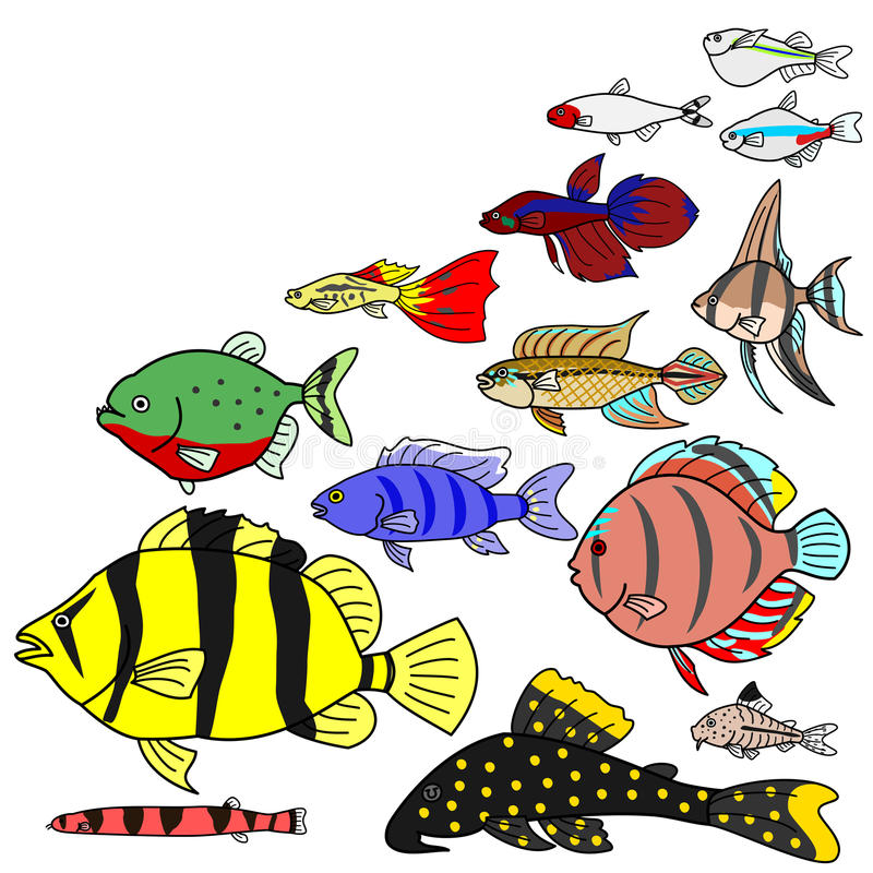 Freshwater Tropical fish species. With copy space stock illustration