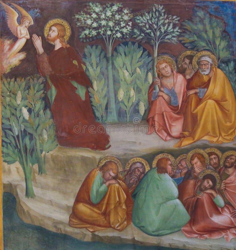 Freskomålning i San Gimignano - Jesus i trädgården av Gethsemane arkivbilder