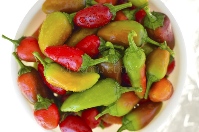 Fresno chili pepper. Red yellow green fresh royalty free stock photography