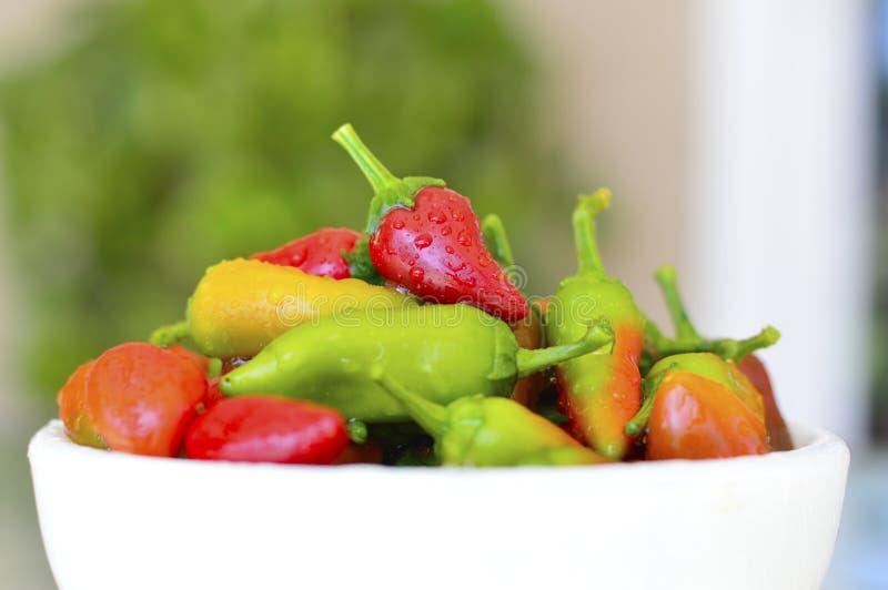 Fresno chili pepper. Red yellow green fresh royalty free stock image