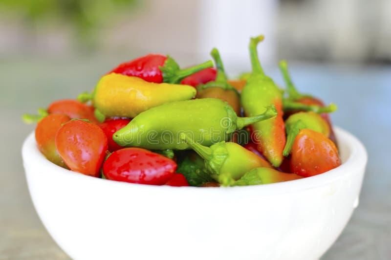 Fresno chili pepper. Red yellow green fresh royalty free stock photos