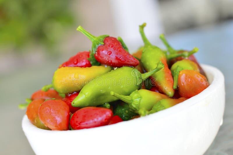 Fresno chili pepper. Red yellow green fresh stock photo