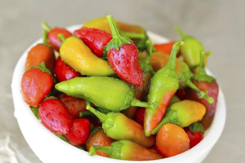 Fresno chili pepper. Red yellow green fresh royalty free stock photo