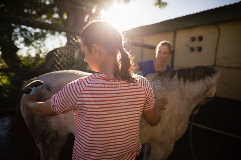 Freunde, die Pferd an der Scheune säubern stockbild