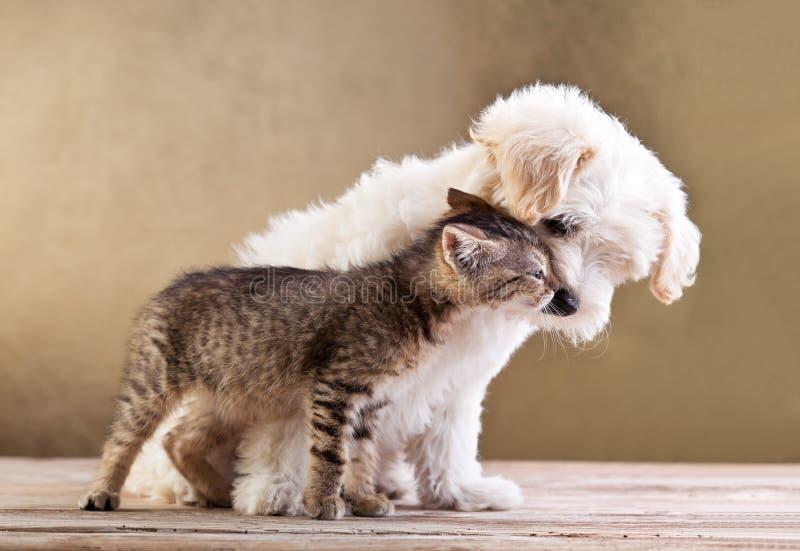 Freunde - Hund und Katze zusammen stockfotos