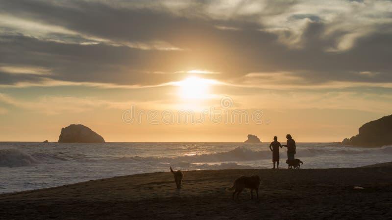 Freunde und Hunde am Strand während des Sonnenuntergangs lizenzfreie stockbilder