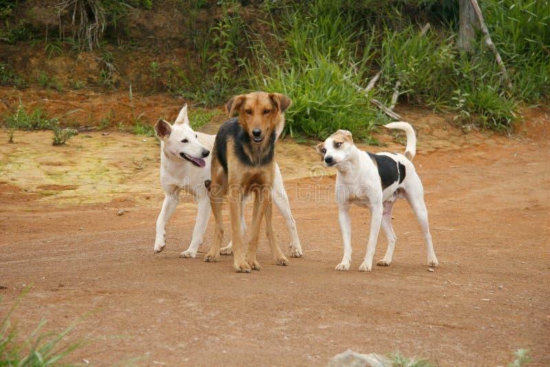Freundhunde stockfotos
