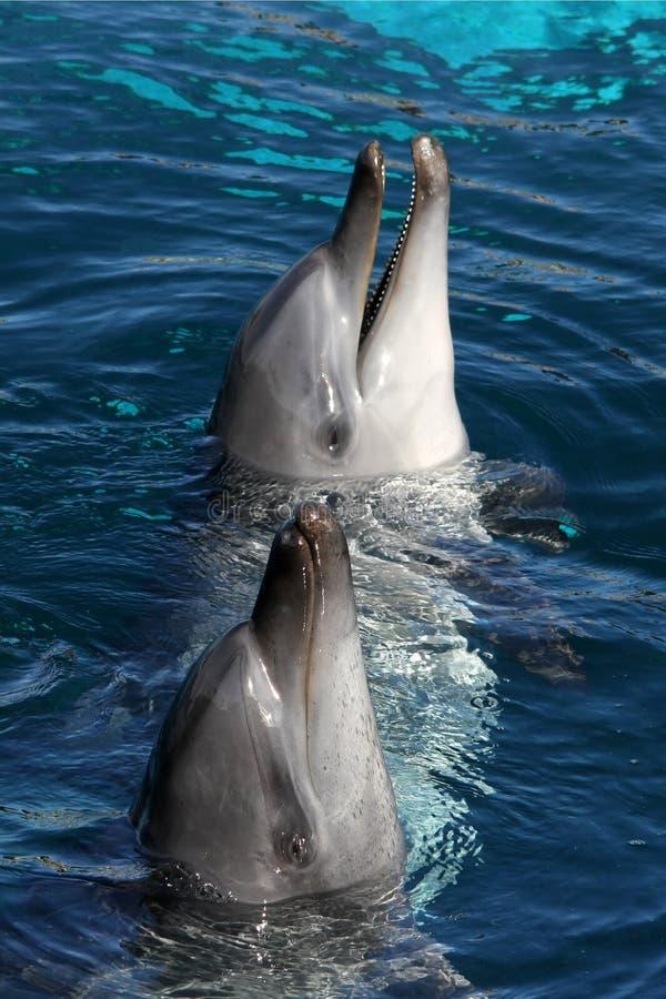 Freundliche Delphine stockbild