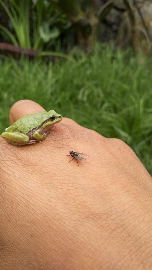 Freundliche Tiere der Natur, die Sie bewusst sein müssen lizenzfreie stockbilder
