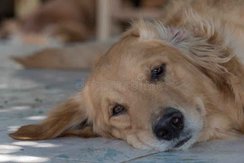Freundlicher Hund lizenzfreie stockfotografie